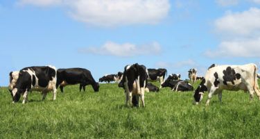 Importance of Mineral Supplementation in the Dairy Herd