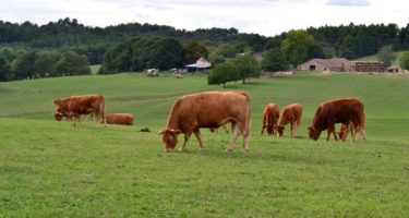 Recommendations for moving to an Autumn/Winter Feeding Programme