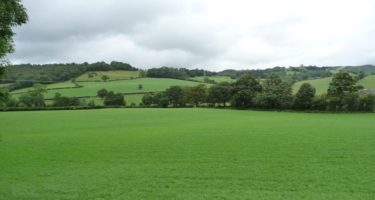 Key Factors for Successful Reseeding