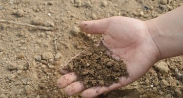 Importance of Soil Testing to Assess Phosphorus and Potassium Levels this Autumn