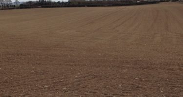 Soil Fertility and its Impact on Silage Yields